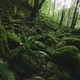 moss and lush vegetation  in green natural forest - PhotoDune Item for Sale