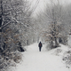 man walking on snowy path in winter forest scenery - PhotoDune Item for Sale