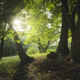 green summer natural landscape with sun and trees - PhotoDune Item for Sale