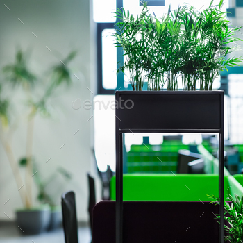 Green plants in modern open space office for freelancer