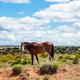 Wild horse inArizona, US of America. Canyon de Chelly area Arizona, USA - PhotoDune Item for Sale