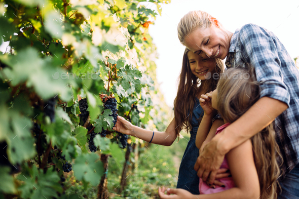 Winemaker cute young family together in vineyard - Stock Photo - Images
