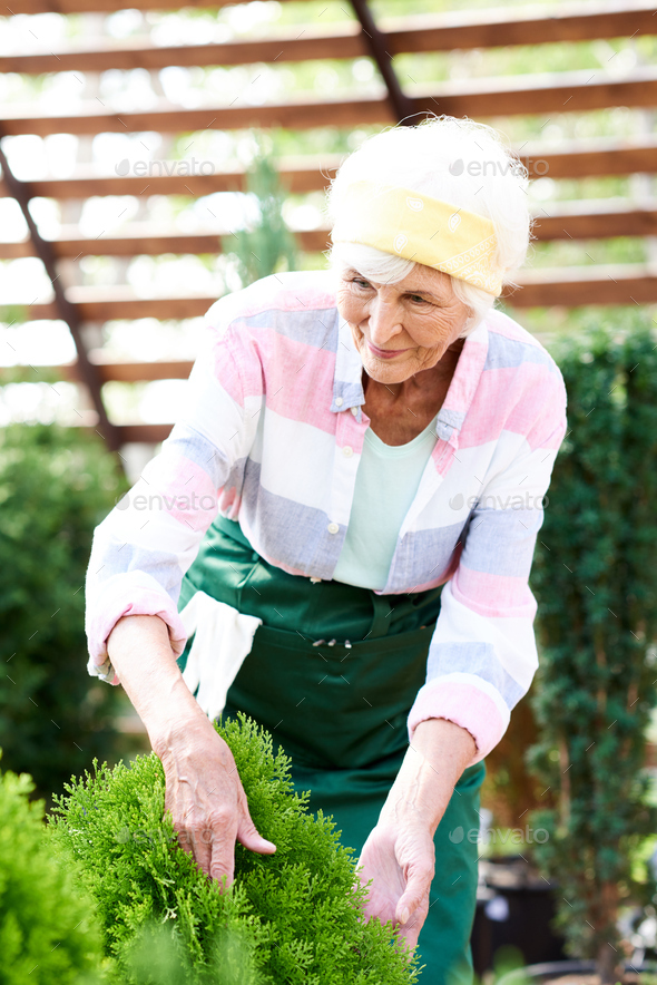 Mature Woman Gardening - Stock Photo - Images