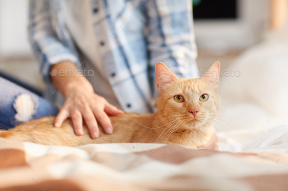 Beautiful Ginger Cat at Home - Stock Photo - Images