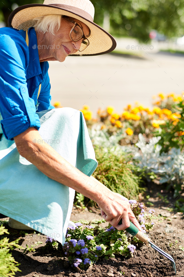 Senior Woman Planting Flowers in Garden - Stock Photo - Images