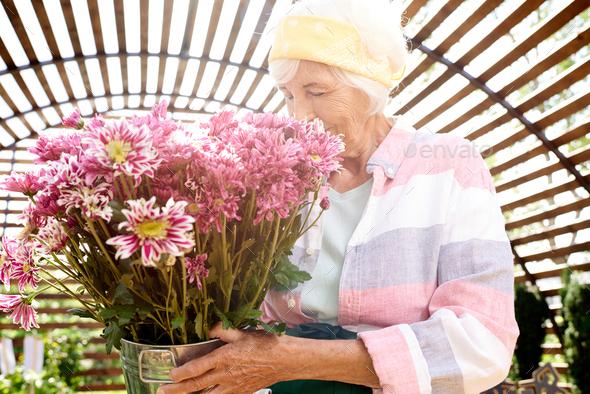 Senior Gardener Holding Flowers - Stock Photo - Images