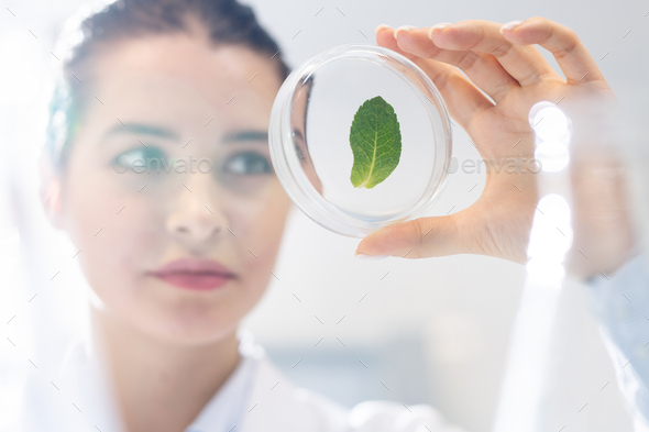 Biologist studying structure of plant leaf - Stock Photo - Images