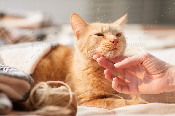 Young Woman Stroking Ginger Cat - Stock Photo - Images