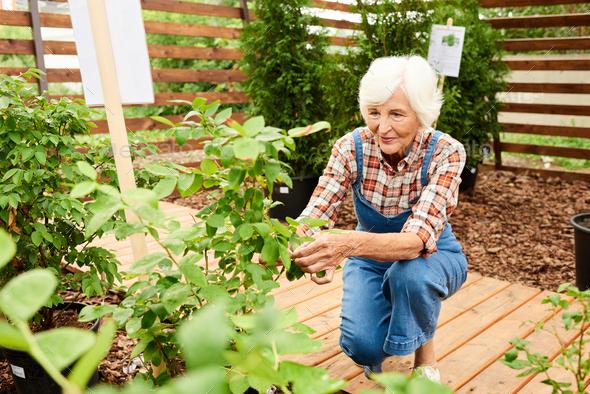 Senior Gardener in Plantation - Stock Photo - Images