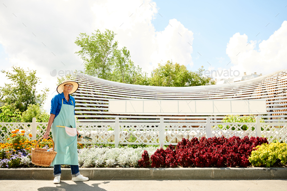 Senior Woman in Orchard - Stock Photo - Images
