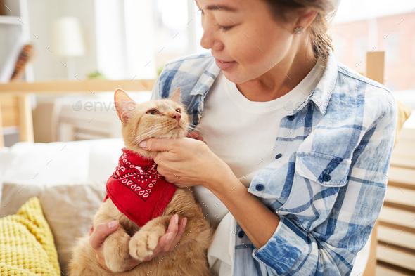 Cat Wearing Bandana - Stock Photo - Images