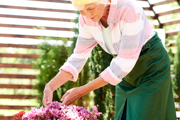 Senior Woman Growing Flowers - Stock Photo - Images
