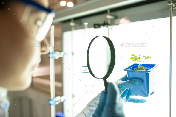 Bio-scientist examining seedling - Stock Photo - Images