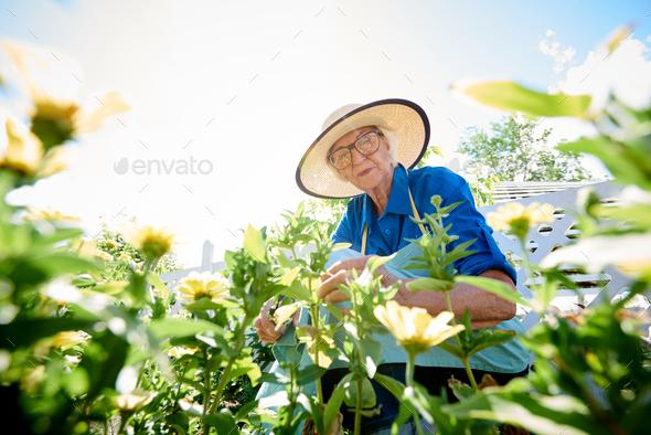 Senior Woman Planting Flowers - Stock Photo - Images