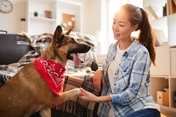 Big Dog Giving Paw - Stock Photo - Images