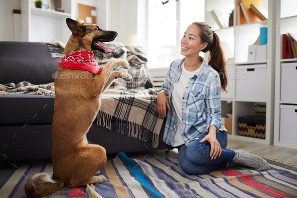 Training Dog at Home - Stock Photo - Images