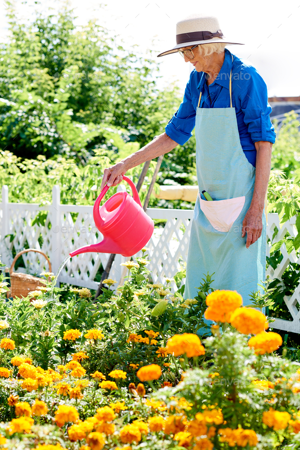 Senior Woman Watering Flowers - Stock Photo - Images