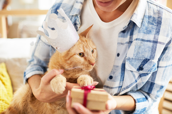 Present for Cat - Stock Photo - Images