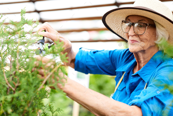 Smiling Senior Woman Caring for Plants - Stock Photo - Images