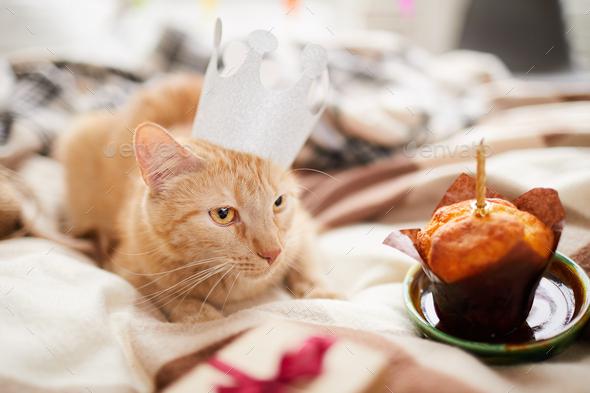 Cat Birthday - Stock Photo - Images