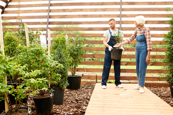 Workers Setting Up Garden - Stock Photo - Images