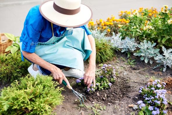 Female Gardener Planting Flowers - Stock Photo - Images