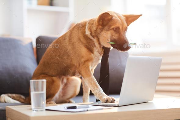 Dog Boss - Stock Photo - Images