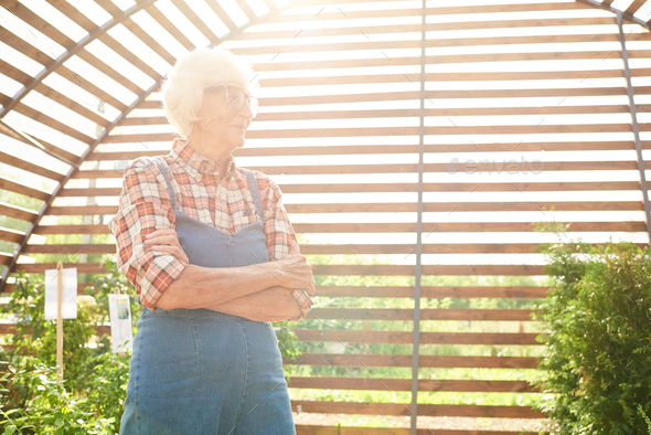 Senior Gardener in Sunlight - Stock Photo - Images