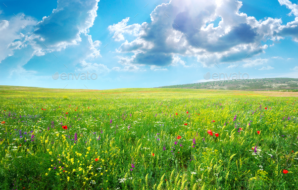 Spring meadow of flowers - Stock Photo - Images
