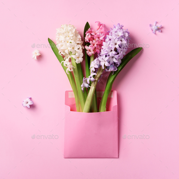Spring hyacinth flowers in pink postal envelope over punchy pastel background with copy space. Top - Stock Photo - Images
