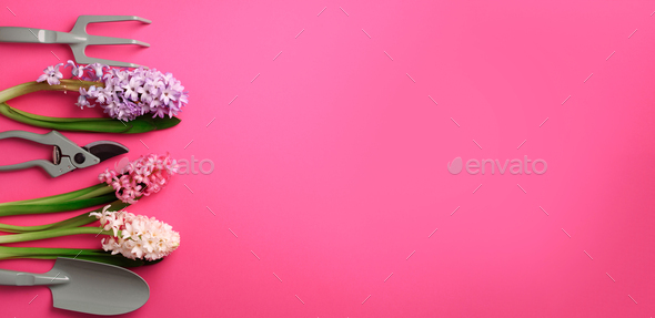 Garden pruner, rake, with flowers on pink punchy pastel background. Banner with copy space. Spring - Stock Photo - Images
