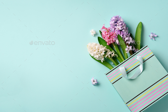 Fresh hyacinth flowers in shopping bag on blue punchy pastel background. Banner with copy space - Stock Photo - Images