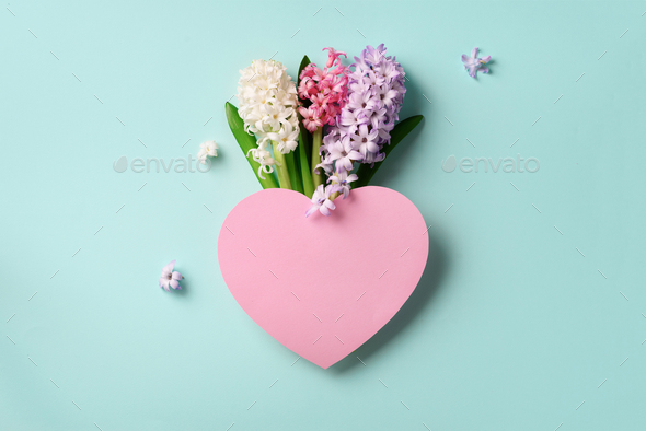Spring hyacinth flowers and pink paper heart on blue punchy pastel background. Square crop. Spring - Stock Photo - Images