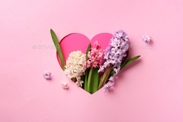 Hyacinth flowers in hole in heart shaped form over pink punchy pastel background. Top view, flat lay - Stock Photo - Images