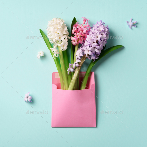 Spring hyacinth flowers in pink postal envelope over blue background with copy space. Top view, flat - Stock Photo - Images