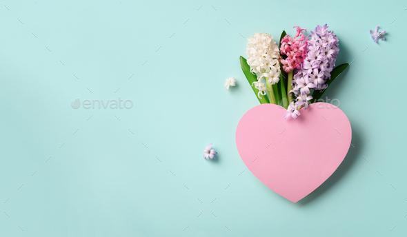 Spring hyacinth flowers and pink paper heart on blue punchy pastel background. Banner with copy - Stock Photo - Images