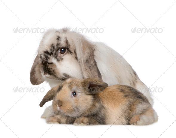 Rabbit - Stock Photo - Images