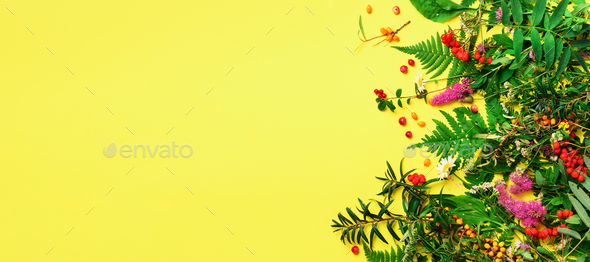 Ingredients of herbal alternative medicine, holistic and naturopathy approach on yellow background - Stock Photo - Images