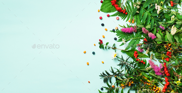 Ingredients of herbal alternative medicine, holistic and naturopathy approach on blue background - Stock Photo - Images