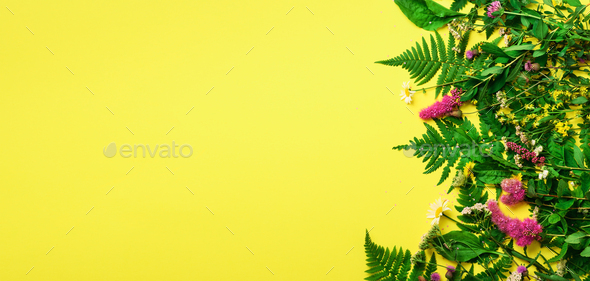 Wild summer flower on yellow background. Creative flat layout pattern with copy space, top view - Stock Photo - Images