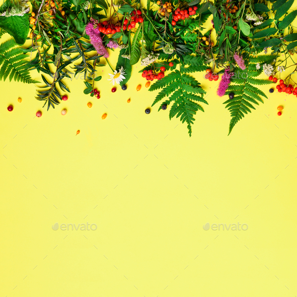 Wild healing herbs on pastel yellow background. Alternative medicine concept, holistic approach. Top - Stock Photo - Images