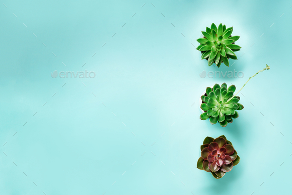 Pattern of green exotic succulents on blue background. Flat lay. Top view. Pop art design, creative - Stock Photo - Images
