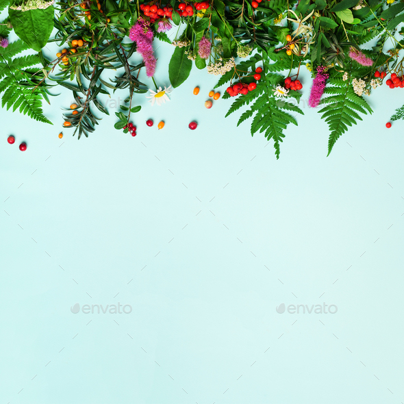 Wild healing herbs on blue pastel background. Alternative medicine concept, holistic approach. Top - Stock Photo - Images