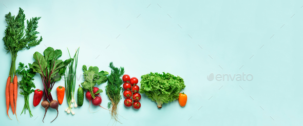 Organic vegetables and garden tools on blue background with copy space. Banner. Top view of carrot - Stock Photo - Images