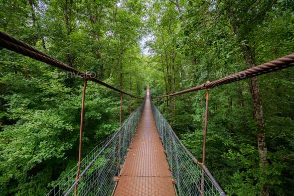 Narrow metal foot bridge across green forest in summer - Stock Photo - Images