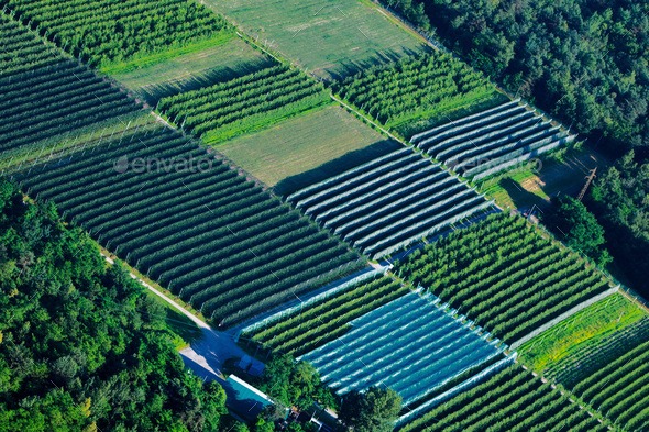 Large cultivation greenhouse seen - Stock Photo - Images