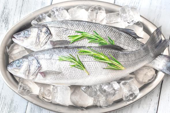 Fresh sea bass fish - Stock Photo - Images
