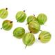 Gooseberry on white - PhotoDune Item for Sale