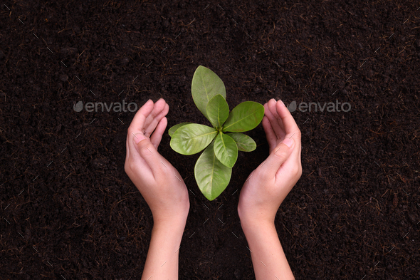 Hands protect Plant - Stock Photo - Images