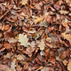 Autumnal background with brown fallen leaves - PhotoDune Item for Sale